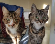 Chloe & Malibu – 14 & 16 years – Female & Male