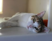 Hermione – 2yrs – Female (RESERVED)