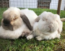 Reggie & Rupert – 9yrs – Male