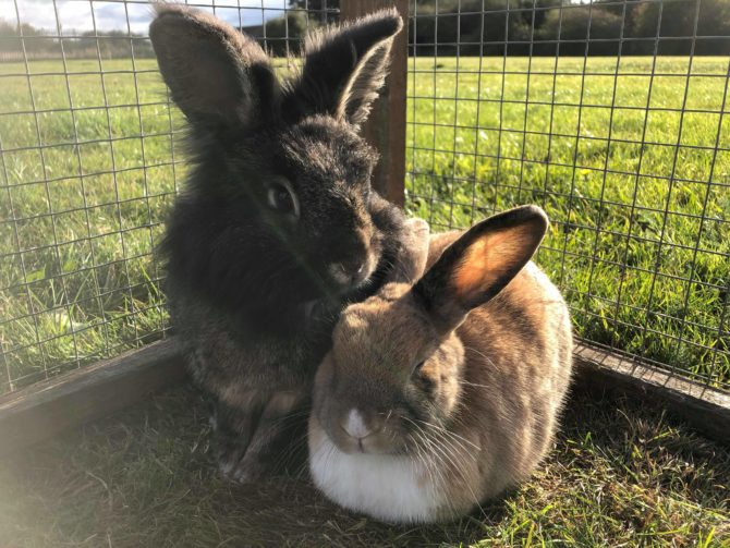 Sonia and Hakase – 7yrs – Female & Male (RESERVED)