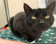 Stanley – 11yrs – Male (RESERVED)