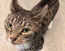 Barry – 5yrs – Male