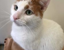 Cyryl – 3yrs – Male (RESERVED)
