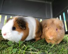 Ethel and Doris – 5yrs – Female
