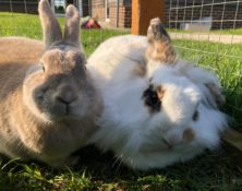 Dottie & Squeakers – 3yrs – Female (RESERVED)
