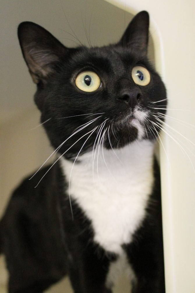 Kevin – 2yrs – Male