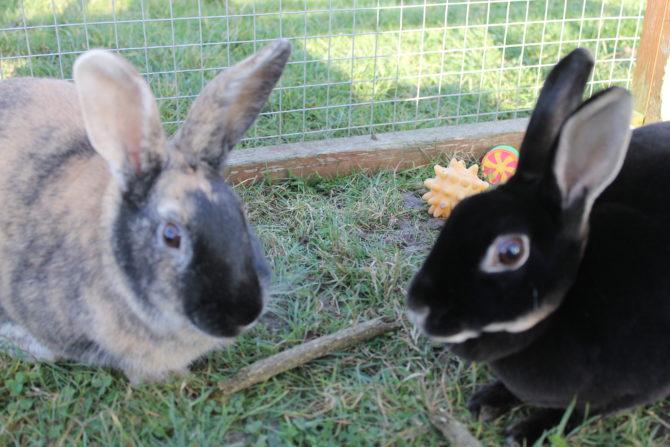 Daisy & Bill – 1yr – Female & Male