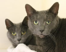 Billie & Warren – 6yrs – Female & Male