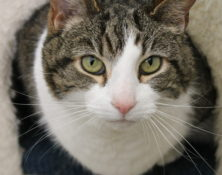 Tilly – 9yrs – Male