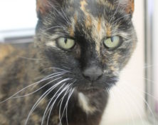 Misty – 15yrs – Female