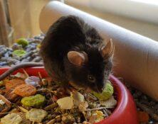 Mice – Various