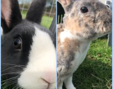 Flossy & Penny – 2yrs – Female