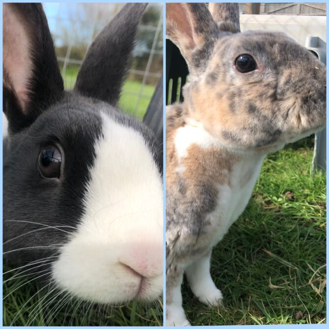 Flossy & Penny – 2yrs – Female