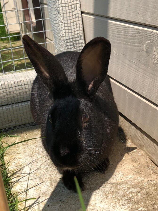Peter – 2yrs – Male