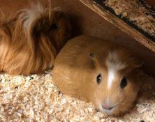 Olive & Pumpkin – 4 years – Females