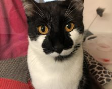 Tom – 1yrs – Male (RESERVED)