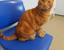 Tyrian – 2yrs – Male (RESERVED)
