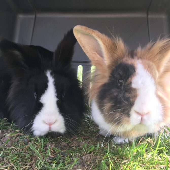 Hobnob & Oreo – 4yrs – Various (RESERVED)