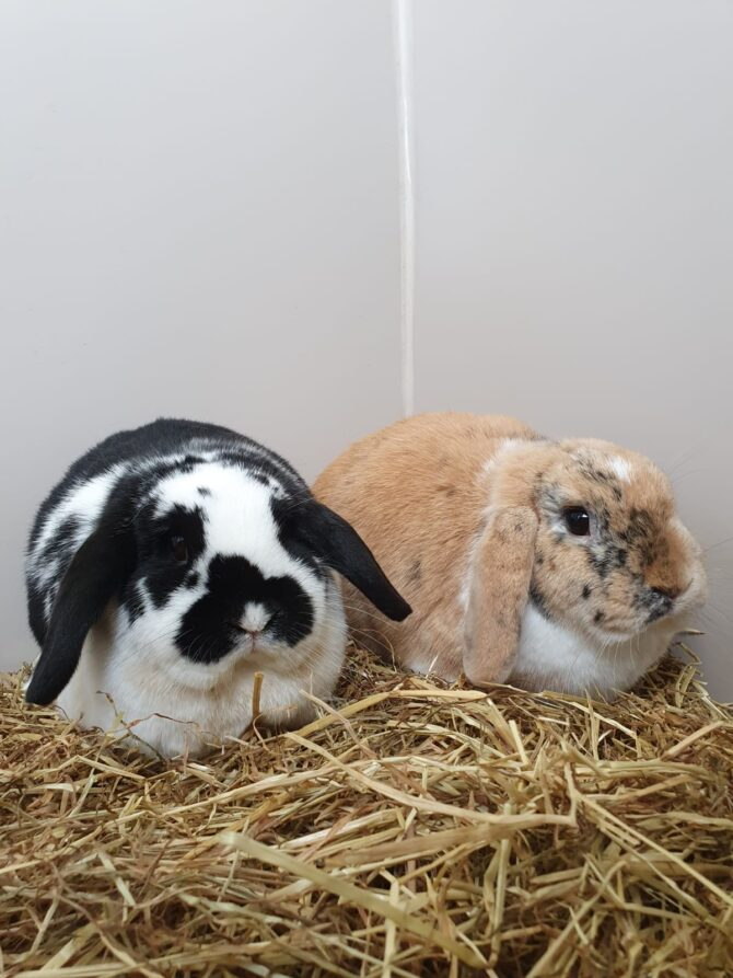 Arthur & Willow – 2yrs – Various (RESERVED)