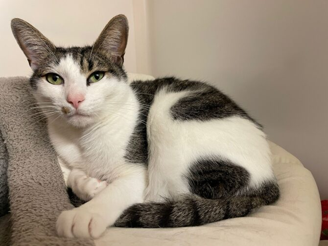 Patches – 3yrs – Male (RESERVED)