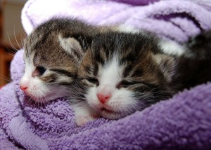 cat-205757_1280