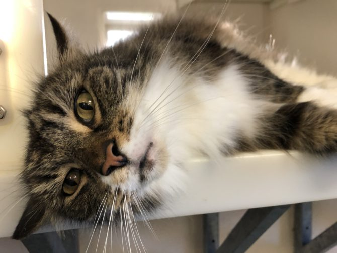 Noodles – 12yrs – Male