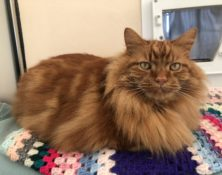 Simba – 8yrs – Male (RESERVED)